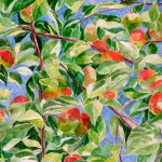 Apples - Sandra Caplan